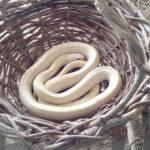 白蛇と蛇石で金運アップ?!東伊豆のパワースポット・白蛇辮財天 清光院