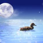 5/11・さそり座満月は感情の揺れに注意が必要