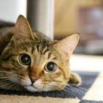 猫でもエンパスになるの?~ペットとエンパス・HSPの関係とは